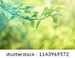 nature background with green... | Shutterstock . vector #1143969572