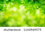 nature background with green... | Shutterstock . vector #1143969575