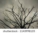 dead tree without leaves or... | Shutterstock . vector #1143998135