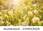 summer nature background with... | Shutterstock . vector #1144015628