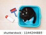 Stock photo a black cat is sitting in a blue washtub in bathroom view from above 1144244885