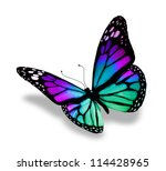 Stock photo butterfly isolated on white background 114428965