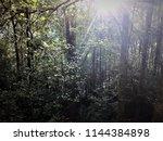 vegetation on the trail to... | Shutterstock . vector #1144384898