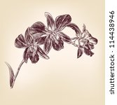 floral orchid vintage drawing... | Shutterstock .eps vector #114438946