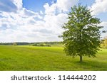 Summer landscape with a tree - stock photo