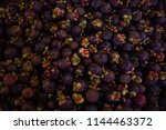 mangosteen type of tropical...   Shutterstock . vector #1144463372