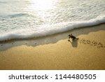 Image Of Little Sea Turtles...