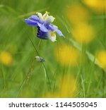 exotic blossoms of the european ... | Shutterstock . vector #1144505045