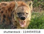 greater kruger national park ... | Shutterstock . vector #1144545518