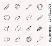 vector vegetable line icon set... | Shutterstock .eps vector #1144611008