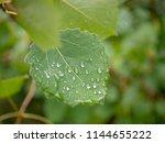 raindrops closeup. raindrops on ... | Shutterstock . vector #1144655222