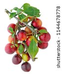 a bunch of ripe red tkemali... | Shutterstock . vector #1144678778