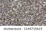 seashell background  lots of... | Shutterstock . vector #1144715615