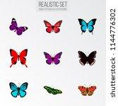 set of moth realistic symbols...   Shutterstock .eps vector #1144776302