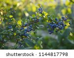 fresh organic blueberries on... | Shutterstock . vector #1144817798