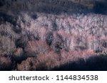 old dark forest | Shutterstock . vector #1144834538
