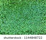 photo of a helxine soleirolii ... | Shutterstock . vector #1144848722