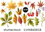 set of autumn yellow leaves and ... | Shutterstock .eps vector #1144860818