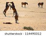 Namib Wild Horses Playing
