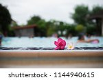plumeria flowers by the pool | Shutterstock . vector #1144940615
