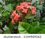 beautiful seasonal flower | Shutterstock . vector #1144969262