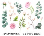 watercolor hand painting set of ... | Shutterstock . vector #1144971008