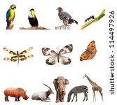real animal collection isolated on white - stock photo