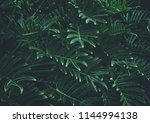 tropical leaves background...   Shutterstock . vector #1144994138