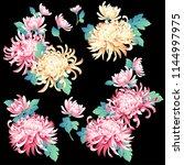 japanese style chrysanthemum ... | Shutterstock .eps vector #1144997975