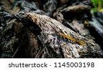 whenever any matter burns  ash... | Shutterstock . vector #1145003198