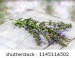 hyssopus officinalis or hyssop...   Shutterstock . vector #1145116502