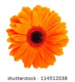 Stock photo single orange gerbera flower isolated on white background 114512038