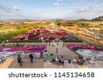 nakhon ratchasima   thailand  ... | Shutterstock . vector #1145134658