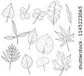 vector set of sketch tree... | Shutterstock .eps vector #1145223065