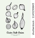 onion bulb vector set....