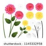 Pink And Yellow Dahlia With...