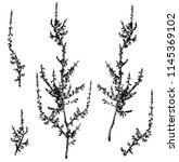 Vector Branches Of Common...
