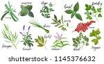 set of popular culinary herbs... | Shutterstock .eps vector #1145376632