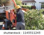 Male Arborist Loading Branches...