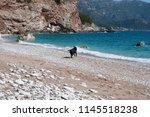 playful young dog runs along...   Shutterstock . vector #1145518238