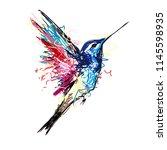 colibri bird. hand drown point  ... | Shutterstock .eps vector #1145598935