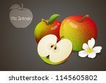 mcintosh apples whole and cut... | Shutterstock .eps vector #1145605802