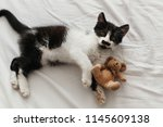 Stock photo cute little kitty with amazing eyes playing with little teddy toy on white bed sheets in stylish 1145609138