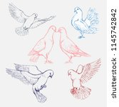 Hand Drawn Set Of Pigeons In...