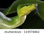 ������, ������: Green rat snake