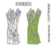 hand drawn asparagus. template... | Shutterstock .eps vector #1145784668