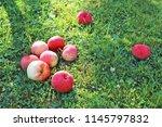 ripe apples on green grass    Shutterstock . vector #1145797832