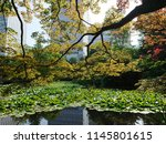 lotus pond with city building... | Shutterstock . vector #1145801615