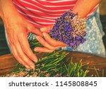 the young hands of gardener tie ... | Shutterstock . vector #1145808845