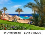 sunny resort beach with palm... | Shutterstock . vector #1145848208